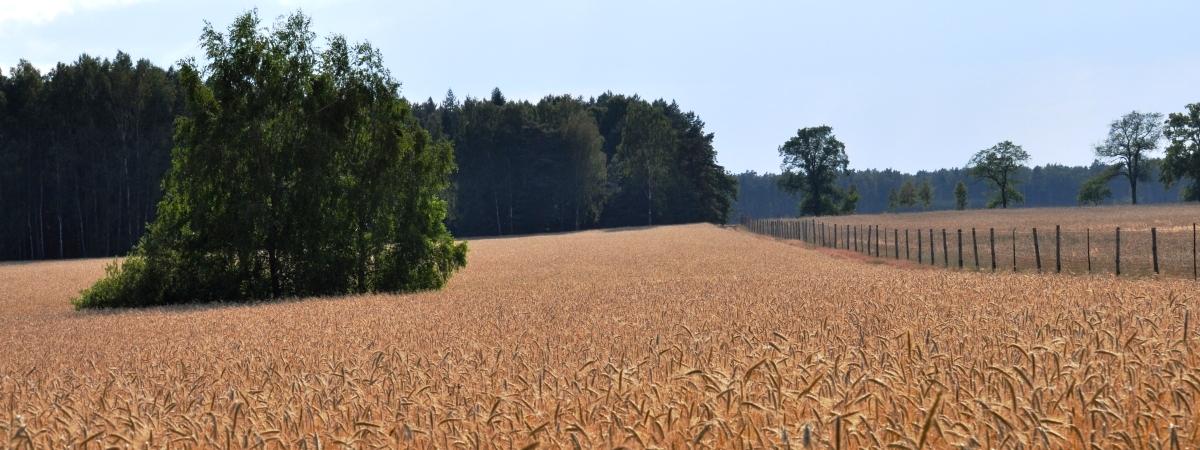Rozwinięte rolnictwo